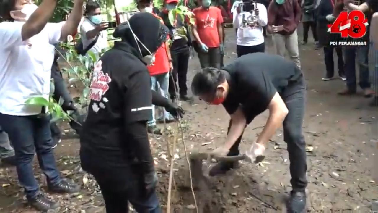 HUT PDI Perjuangan ke-48, Putra Nababan Tanam Pohon bersama Risma